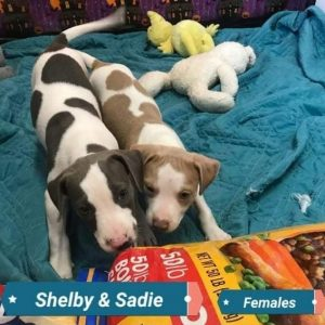 Shelby and Sadie