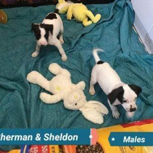 Sherman and Sheldon