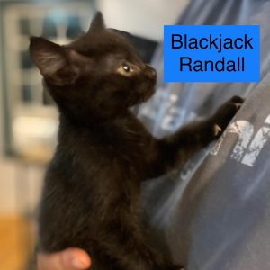 Blackjack Randall
